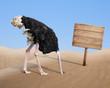 Leinwandbild Motiv scared ostrich burying head in sand near blank wooden signboard