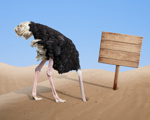 scared ostrich burying head in sand near blank wooden signboard