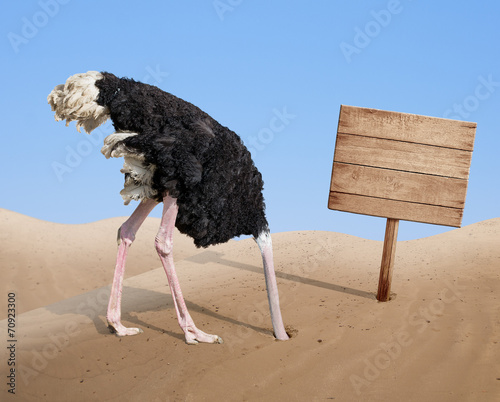 canvas print picture scared ostrich burying head in sand near blank wooden signboard