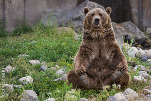 Plexiglas Dragen grizzly bear