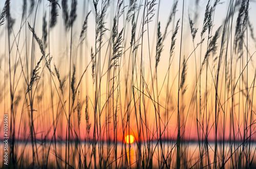 Reed against a colourful decline - 70925921