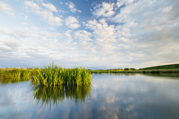 Kwitnące Kwiaty irysów wodnych w jeziorze