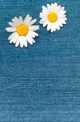 Margeritenblüten auf Jeansstoff, Grußkarte, Hintergrund