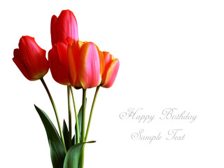 tulip flowers complimentary card