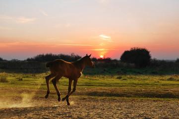 Running little foal