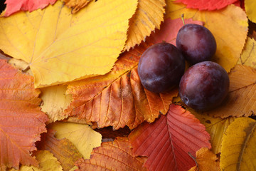 Plums over autumn leaves