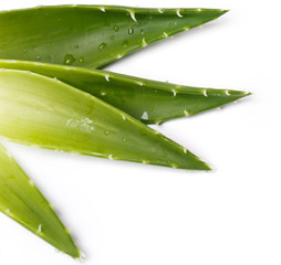 Aloevera on the table