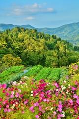 コスモス咲く山古志の秋