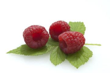 Himbeere; Rubus, idaeus; Waldbeere;