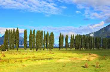 Along green fields avenues of cypresses