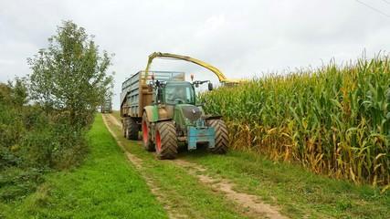 Maisernte mit Traktor