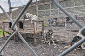 svalbard sled dog farm