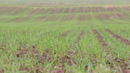 Field sown with grass