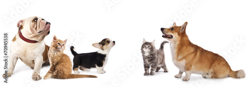 Poster Kat group of dogs and cat look up