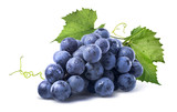 Blue wet grapes bunch isolated on white background