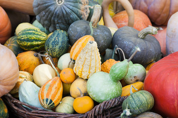 Lots of pumpkins and squash of different sorts