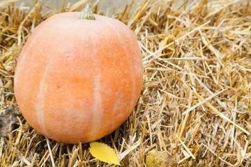 Big pumpkin lying on haystack with selective focus