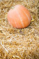 Big pumpkin lying on haystack with copy space