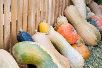 Lots of pumpkins and squash next to wooden fence