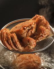 毛ガニ 毛蟹 Crab