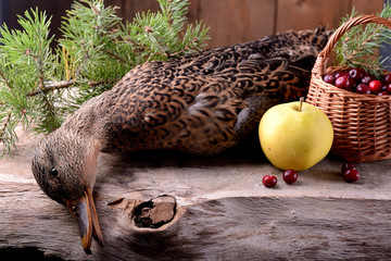 wounded wild duck hunter