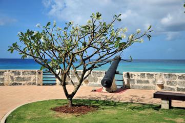 Barbados Canon