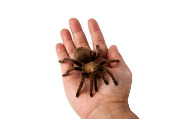Tarantula on a hand.