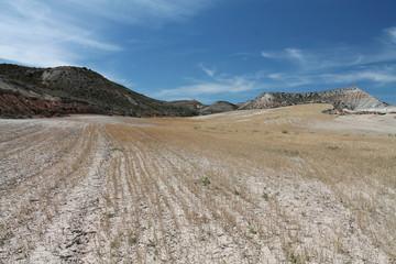 Champ de blé dans le désert