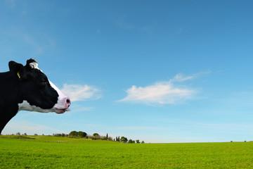 prato verde con mucca che fa la linguaccia