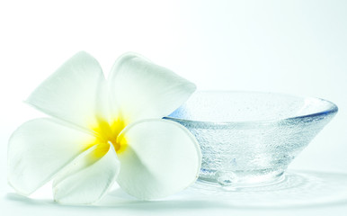 plumeria and Bowl