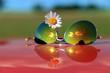 Okulary przeciwsłoneczne i biały kwiatek z odbiciem.
