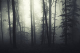 light at the edge of a dark forest with fog