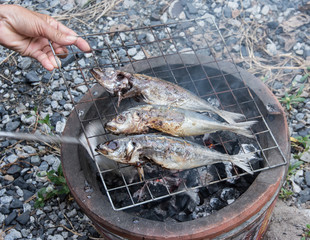 Grilling fish on barbecue