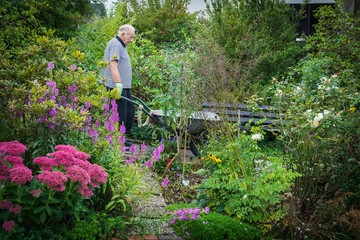 Senior mit Schubkarre im Garten bei der Gartenarbeit