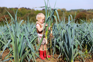 Funny preschooler girl picking leek in the field