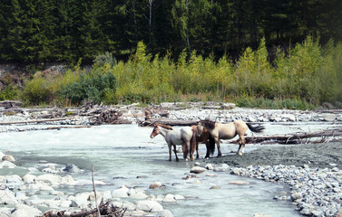 Horses at the watering hole at the mountain river