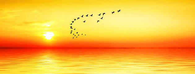 paisaje panoramico de la puesta de sol dorada