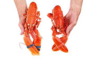 Two lobsters