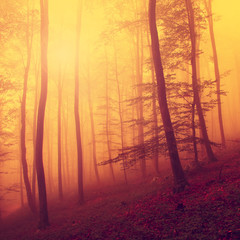 Colored autumn forest scene