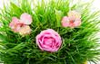 Obrazy na płótnie, fototapety, zdjęcia, fotoobrazy drukowane : Group of pink flowers
