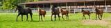 Pferdezucht, Pferde auf Weide - Panorama - 70962373