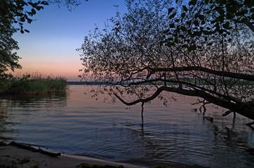 Baumstamm am Wannsee Uferstrand