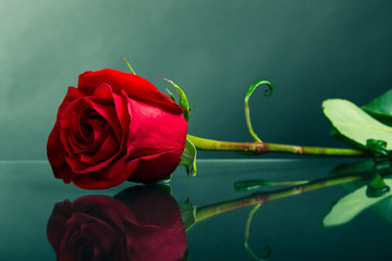 Red rose on glass