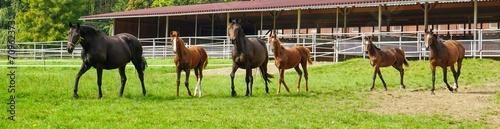Foto op Plexiglas Paardrijden Pferdezucht, Pferde auf Weide - Panorama