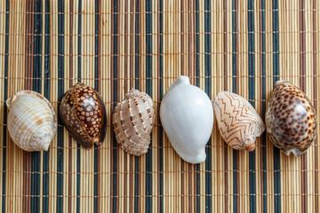 different seashells