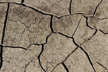 Trockene Erde