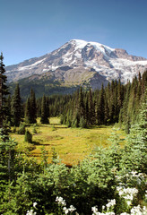 Mt. Rainier at Paradise