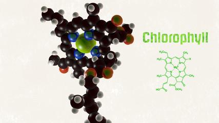 Chlorophyll von links