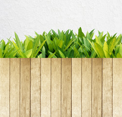 Green leaves and wood and white cement wall, background,