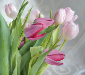 Light-pink tulips